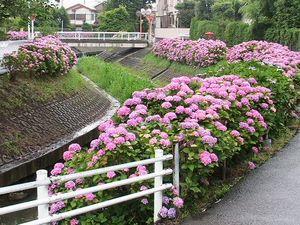 kawachigawa0616
